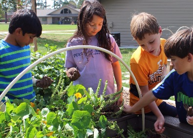 Older students picking plants in the garden